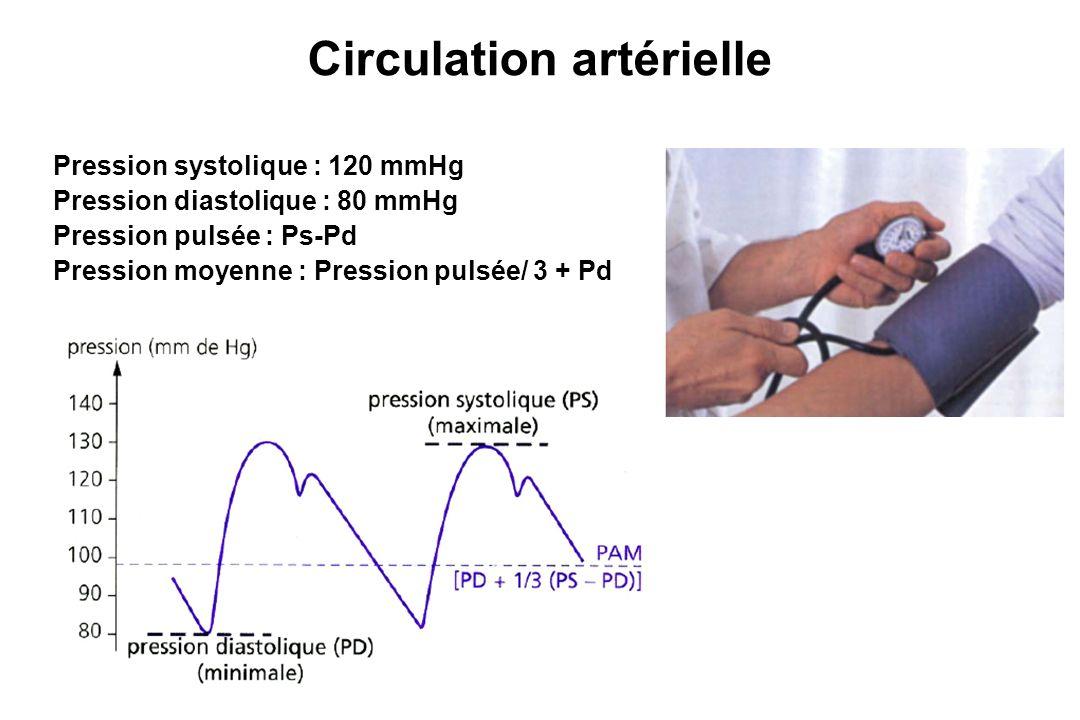 Circulation artérielle