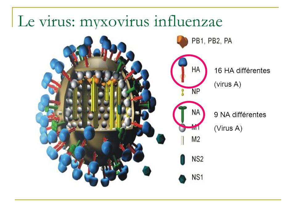 Le virus: myxovirus influenzae
