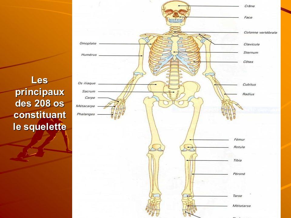 Les principaux des 208 os constituant le squelette