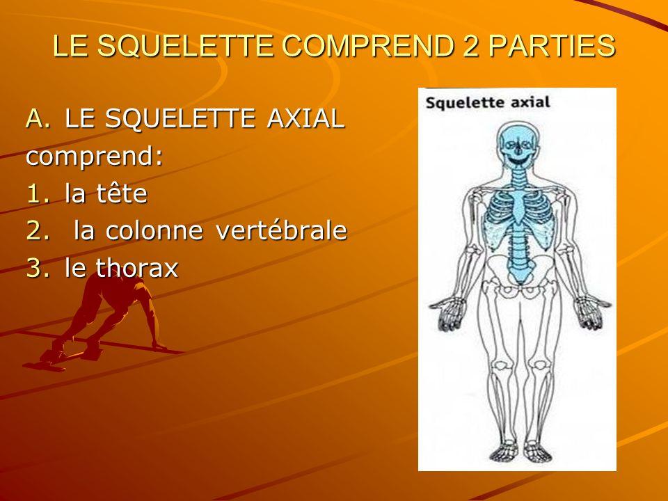 LE SQUELETTE COMPREND 2 PARTIES
