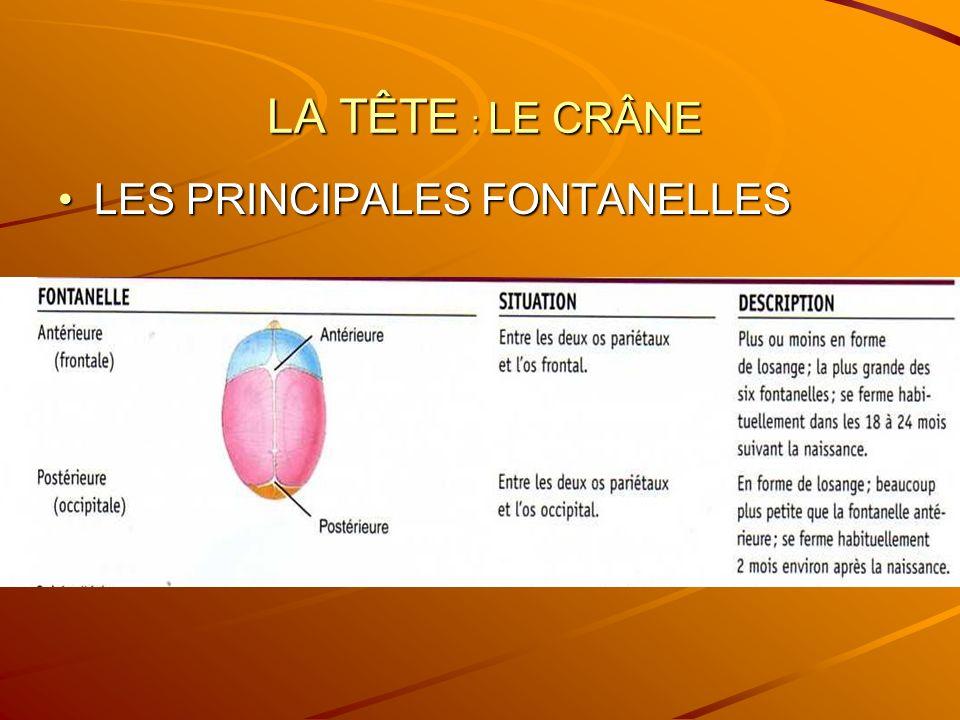 LES PRINCIPALES FONTANELLES