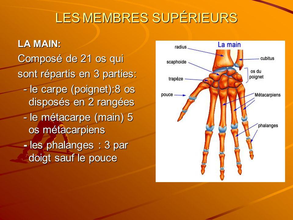 LES MEMBRES SUPÉRIEURS