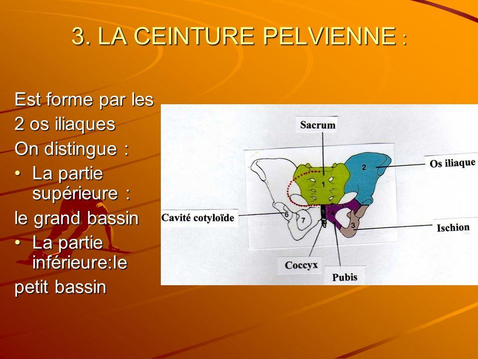 3. LA CEINTURE PELVIENNE :