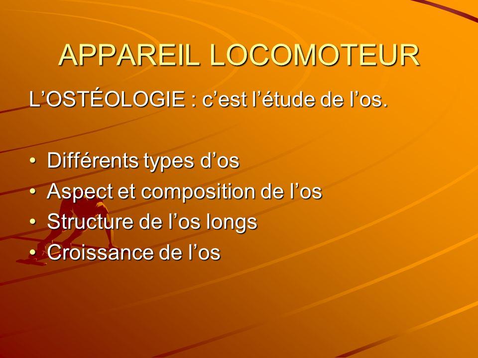 APPAREIL LOCOMOTEUR L'OSTÉOLOGIE : c'est l'étude de l'os.