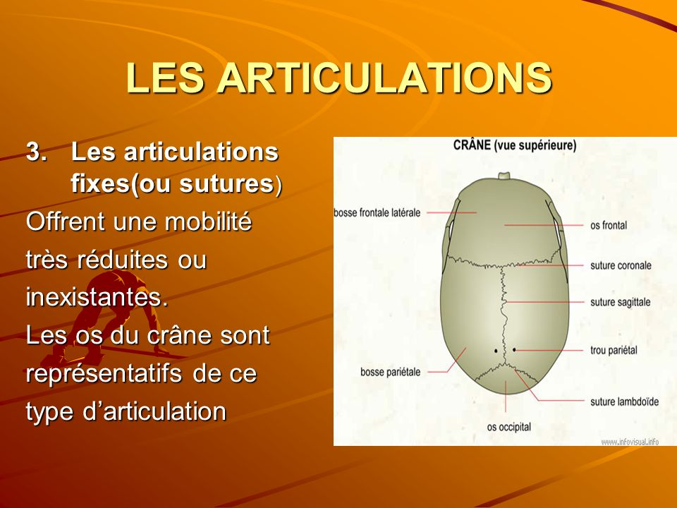 LES ARTICULATIONS Les articulations fixes(ou sutures)