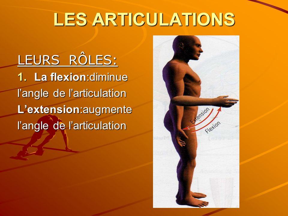 LES ARTICULATIONS LEURS RÔLES: La flexion:diminue