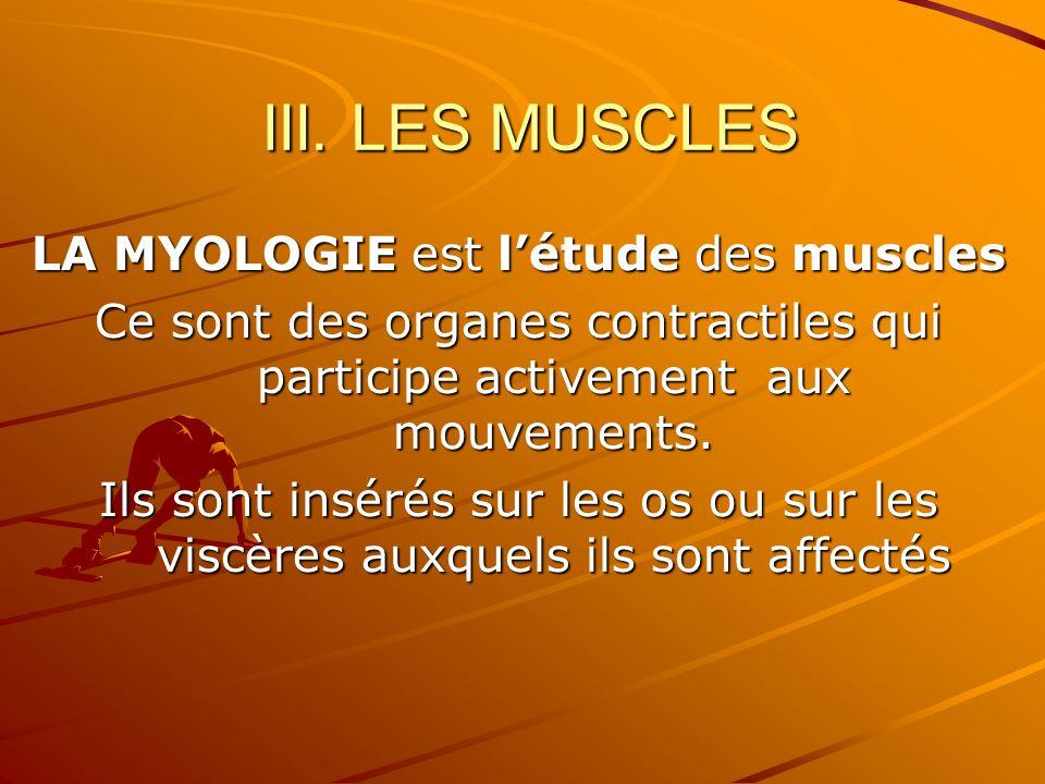 LA MYOLOGIE est l'étude des muscles