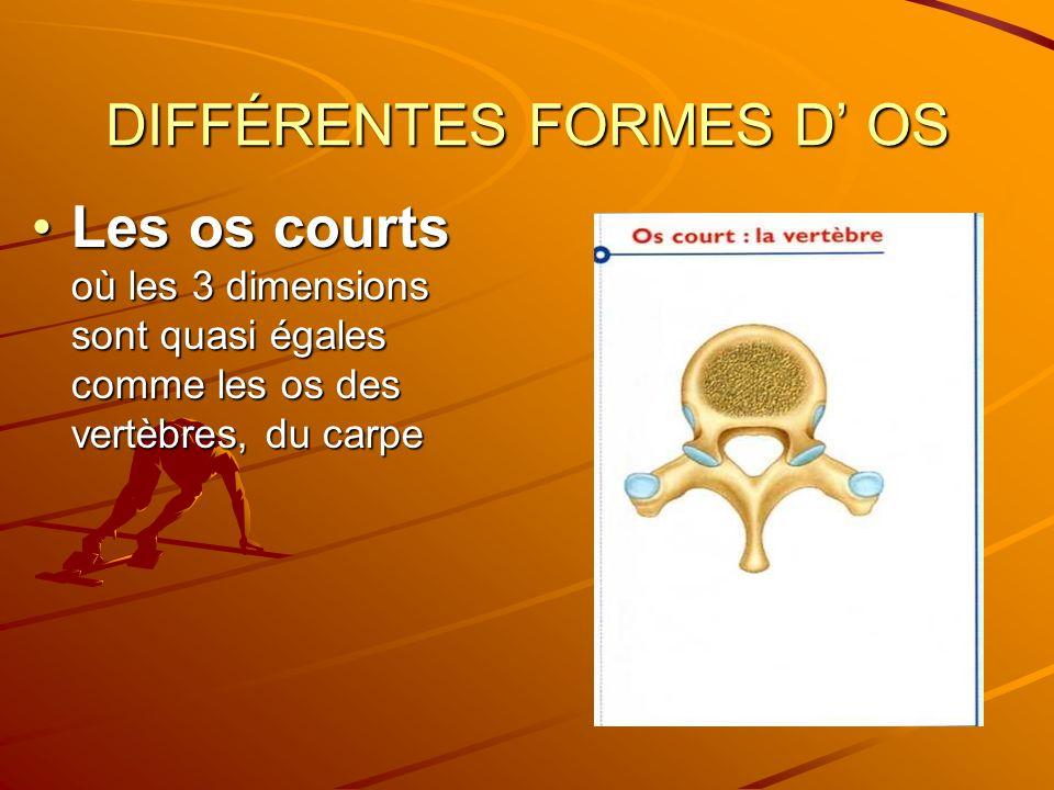 DIFFÉRENTES FORMES D' OS