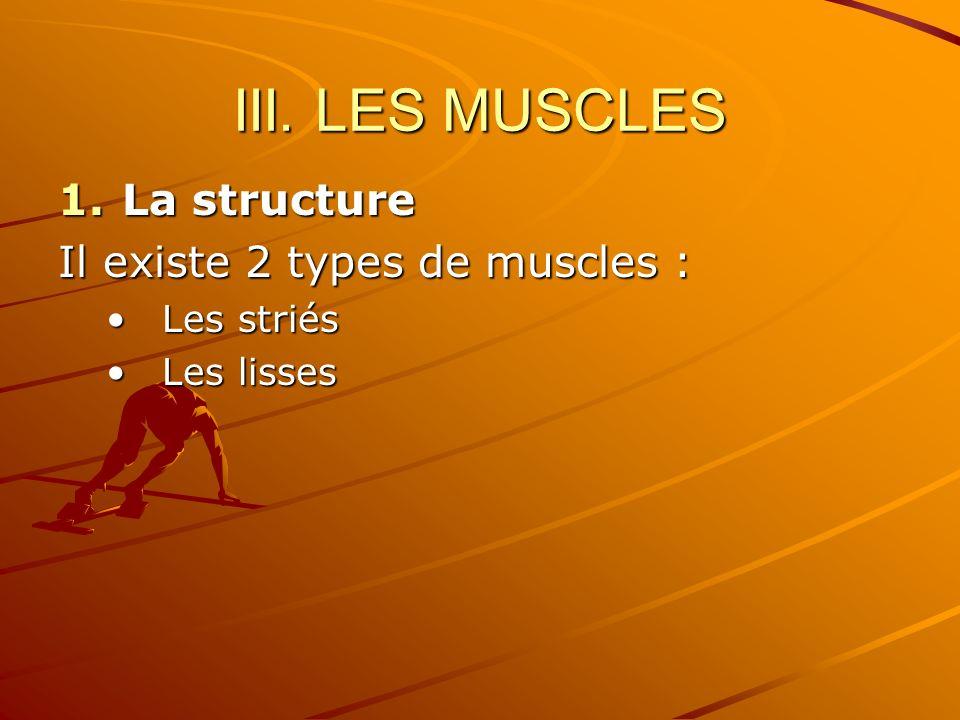 III. LES MUSCLES La structure Il existe 2 types de muscles :