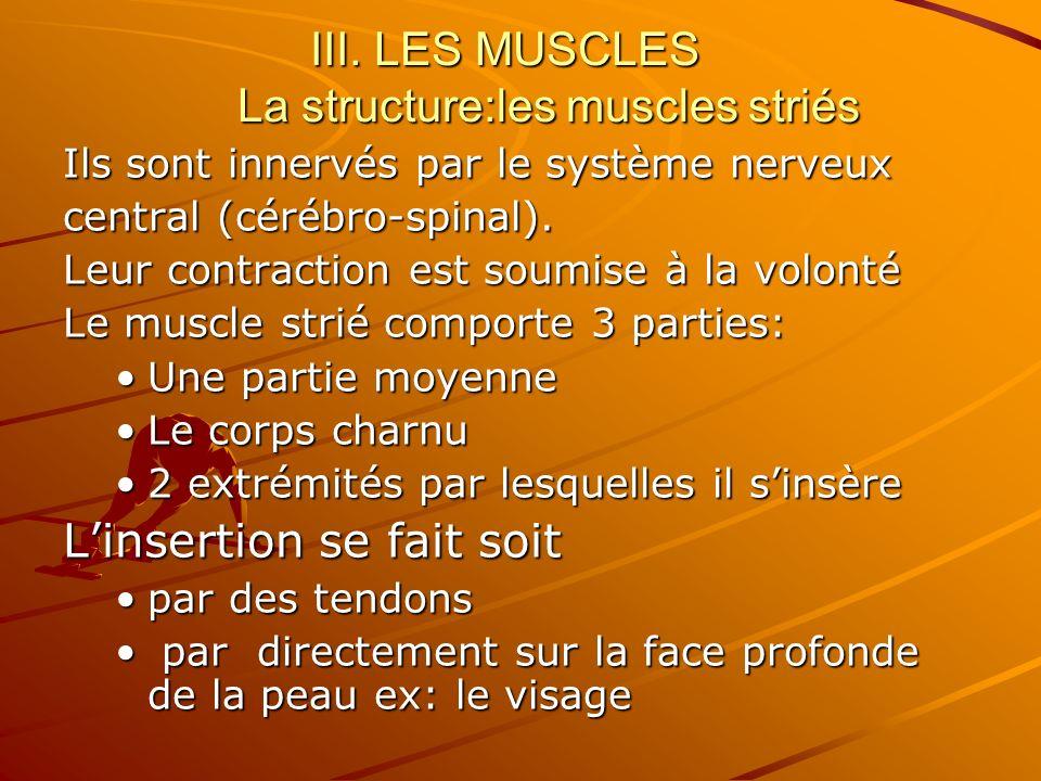 III. LES MUSCLES La structure:les muscles striés