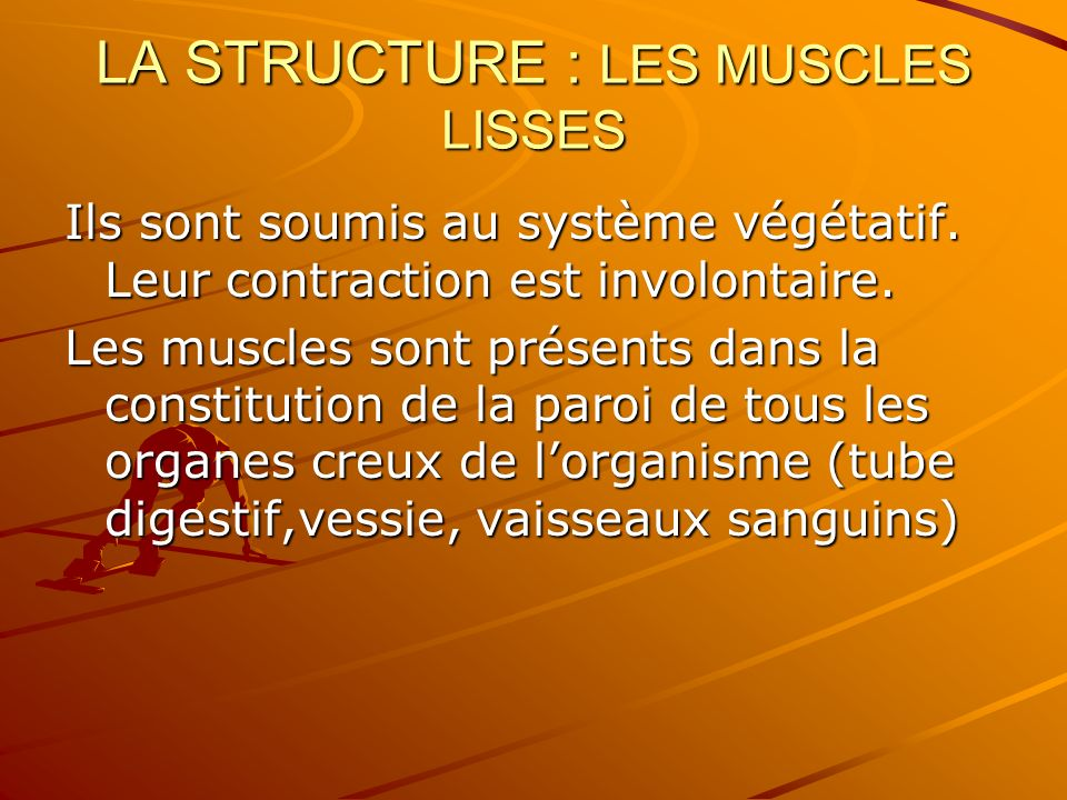 LA STRUCTURE : LES MUSCLES LISSES