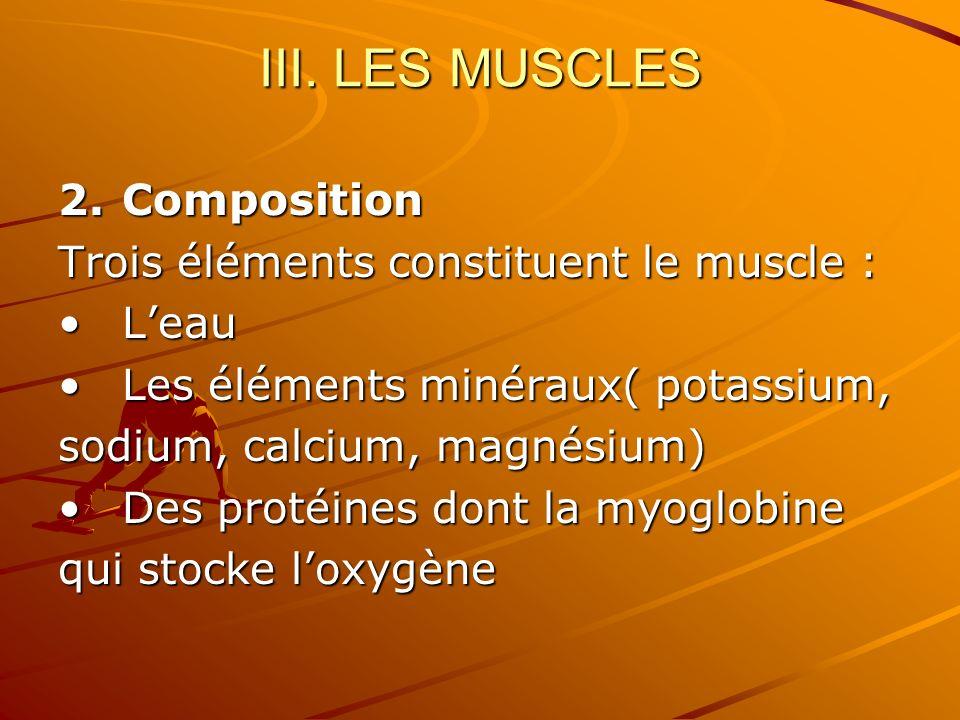 III. LES MUSCLES Composition Trois éléments constituent le muscle :