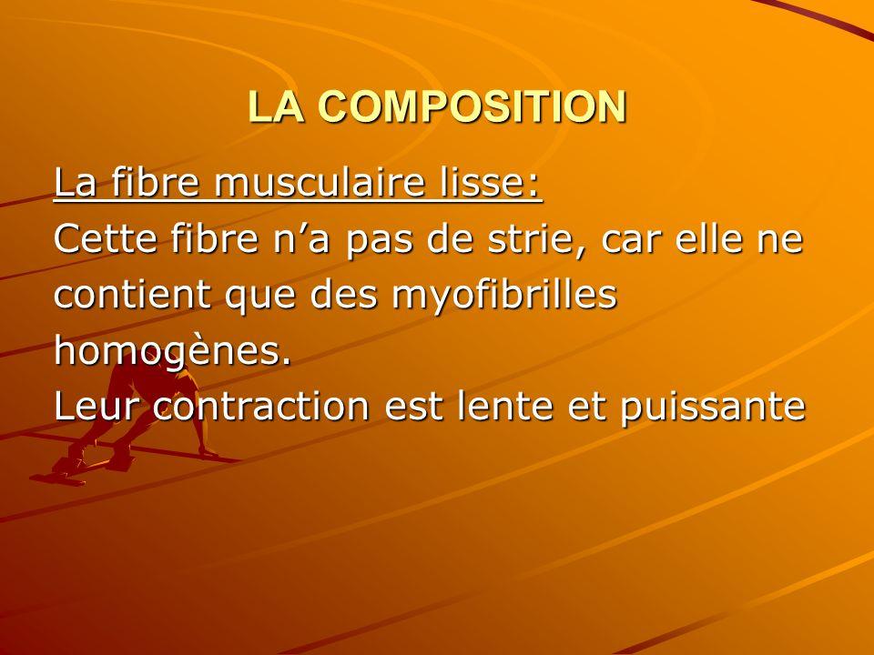 LA COMPOSITION La fibre musculaire lisse: