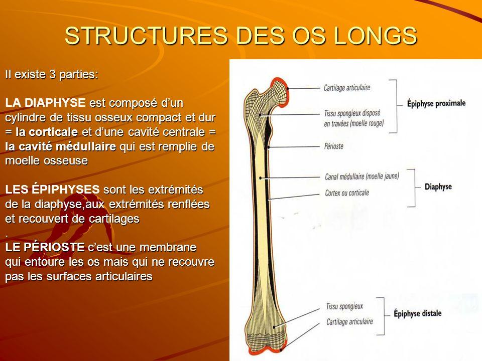 STRUCTURES DES OS LONGS