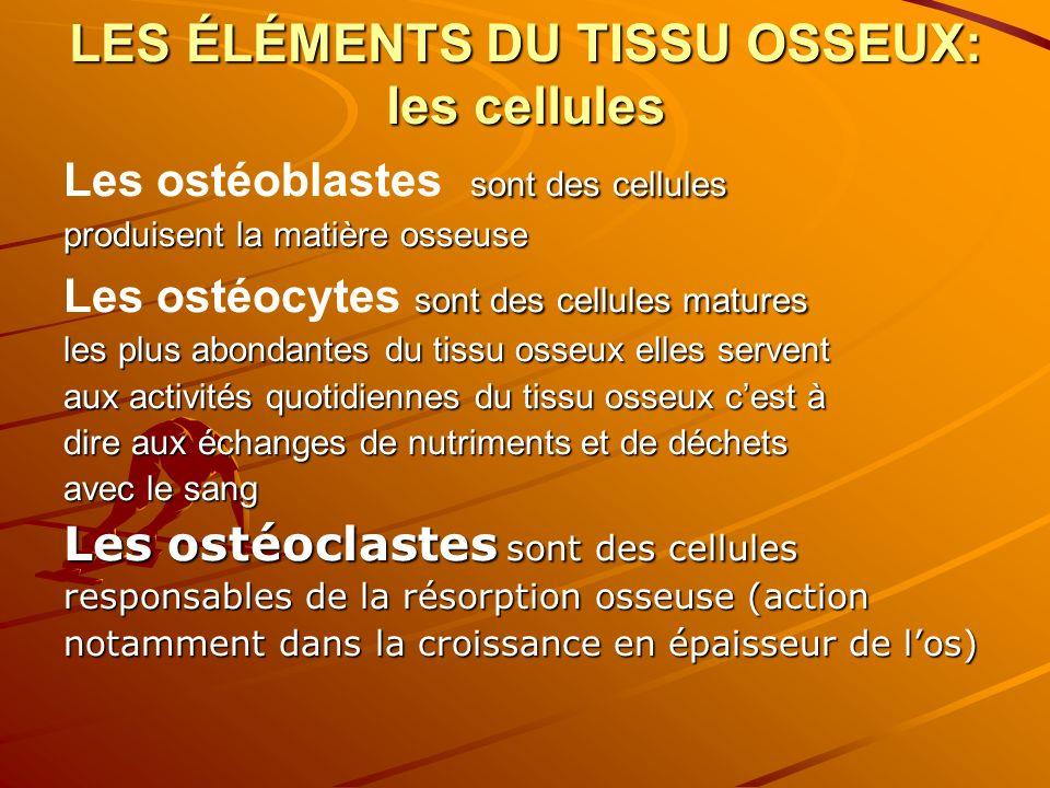 LES ÉLÉMENTS DU TISSU OSSEUX: les cellules