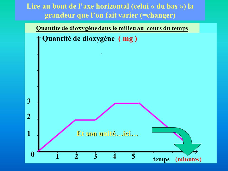Quantité de dioxygène dans le milieu au cours du temps