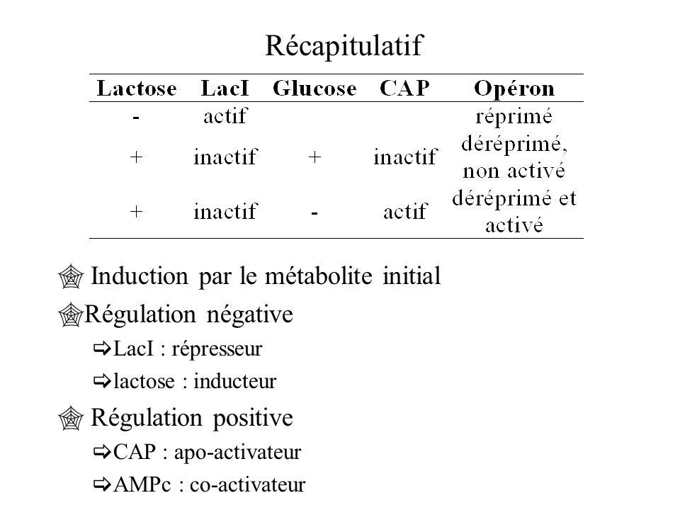 Récapitulatif Induction par le métabolite initial Régulation négative