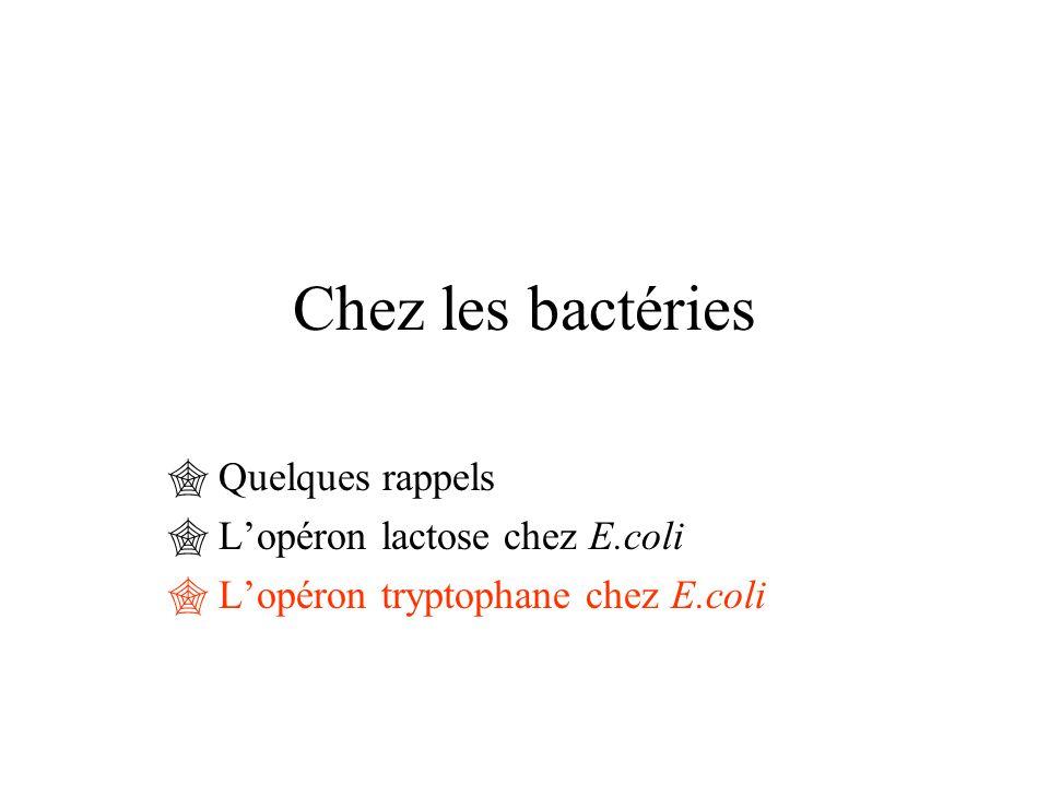 Chez les bactéries Quelques rappels L'opéron lactose chez E.coli