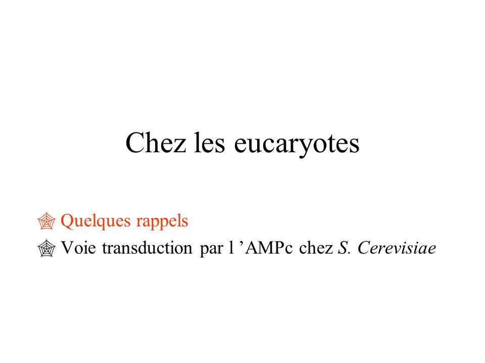 Quelques rappels Voie transduction par l 'AMPc chez S. Cerevisiae