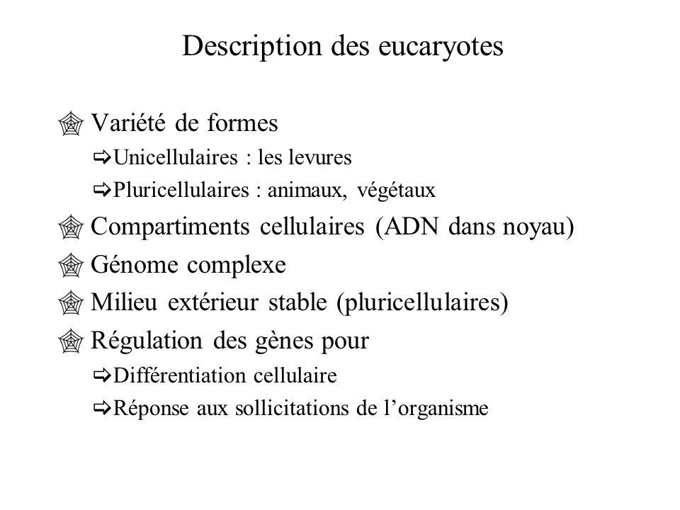 Description des eucaryotes