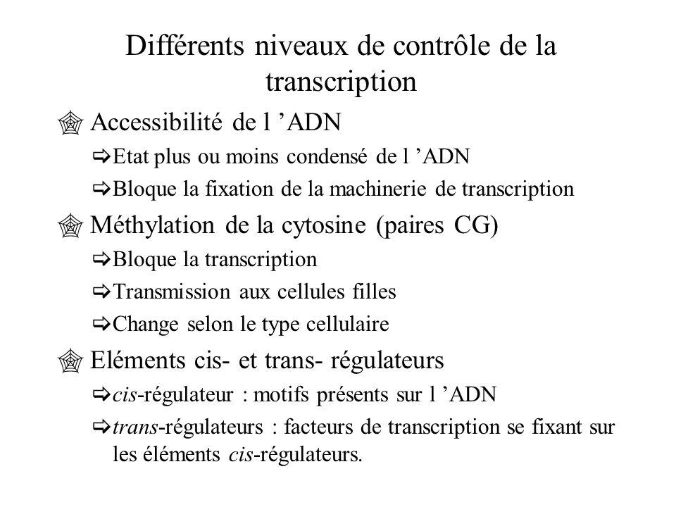 Différents niveaux de contrôle de la transcription