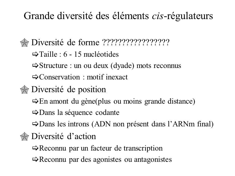 Grande diversité des éléments cis-régulateurs