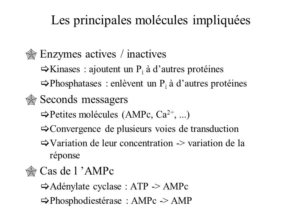 Les principales molécules impliquées
