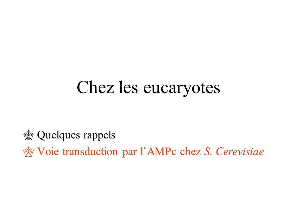 Quelques rappels Voie transduction par l'AMPc chez S. Cerevisiae