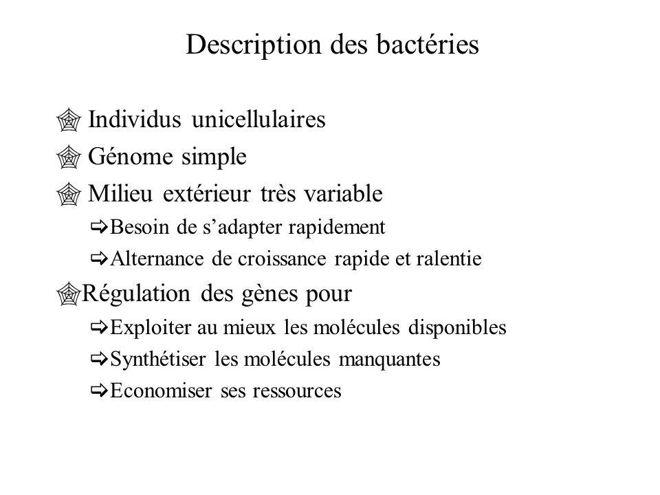 Description des bactéries