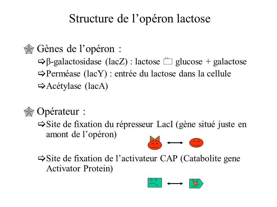 Structure de l'opéron lactose