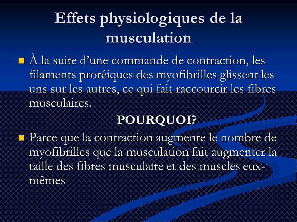Effets physiologiques de la musculation