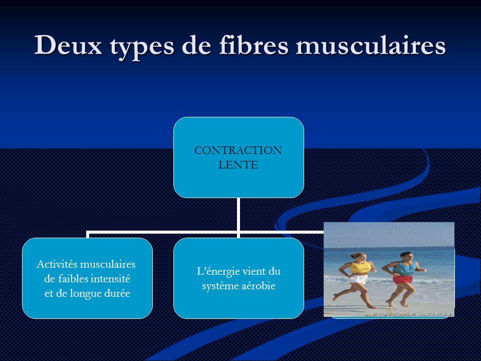 Deux types de fibres musculaires