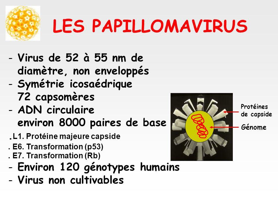 LES PAPILLOMAVIRUS Virus de 52 à 55 nm de diamètre, non enveloppés