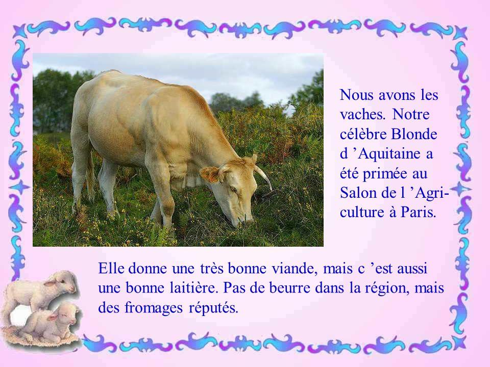 Nous avons les vaches. Notre. célèbre Blonde. d 'Aquitaine a. été primée au. Salon de l 'Agri- culture à Paris.