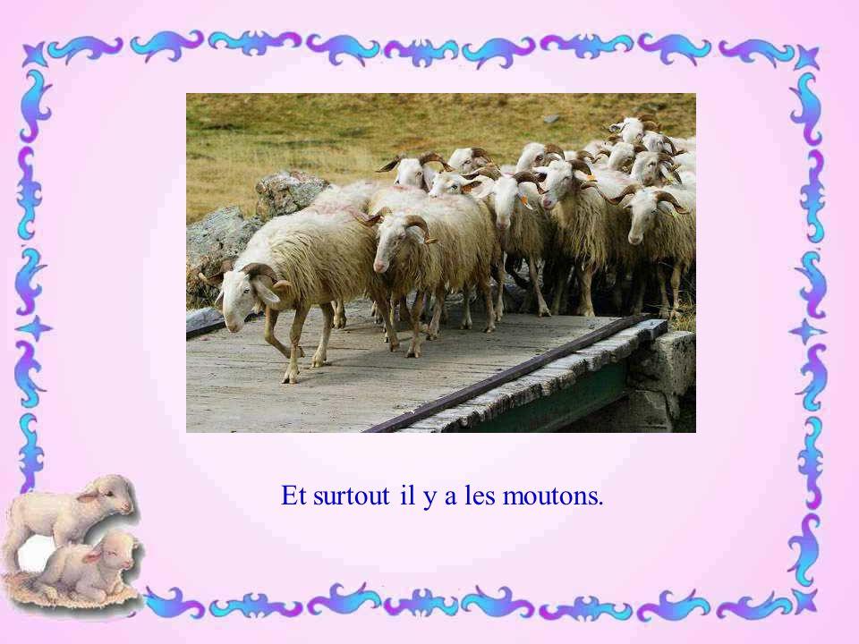 Et surtout il y a les moutons.