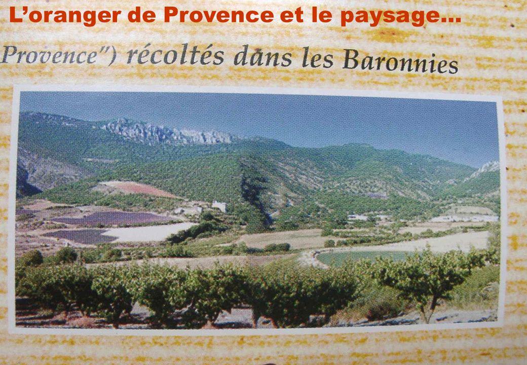 L'oranger de Provence et le paysage…