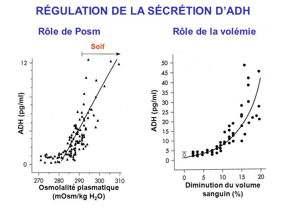 RÉGULATION DE LA SÉCRÉTION D'ADH