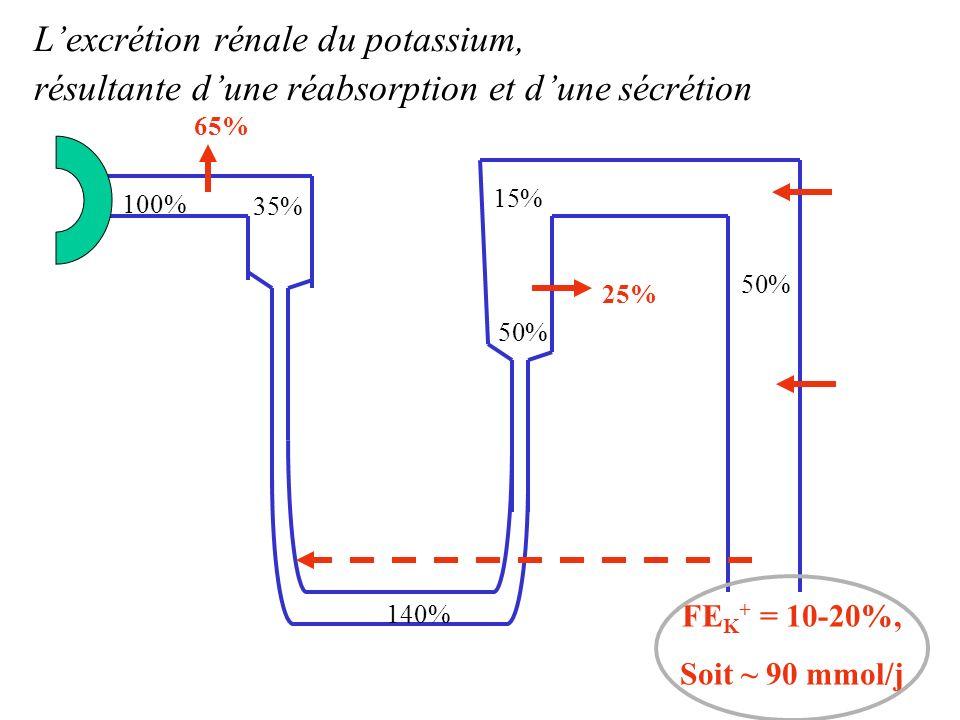 L'excrétion rénale du potassium,