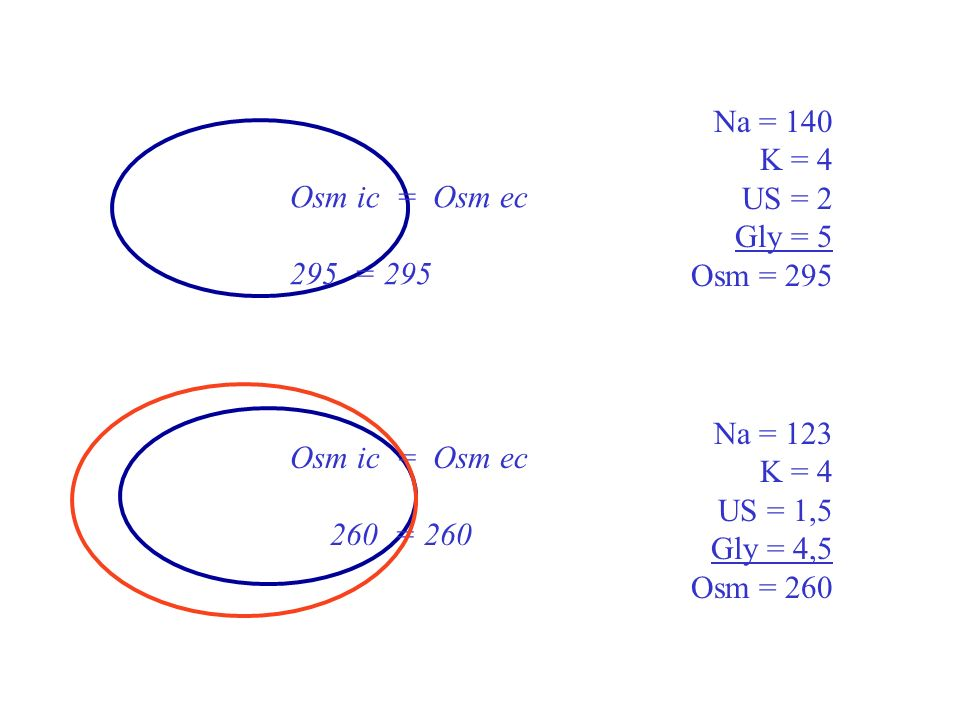 Na = 140 K = 4. US = 2. Gly = 5. Osm = 295. Osm ic = Osm ec. 295 = 295. Na = 123. K = 4. US = 1,5.