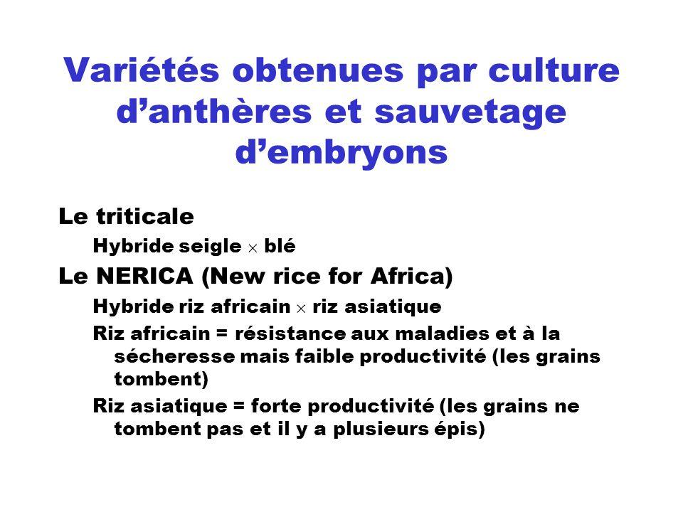 Variétés obtenues par culture d'anthères et sauvetage d'embryons