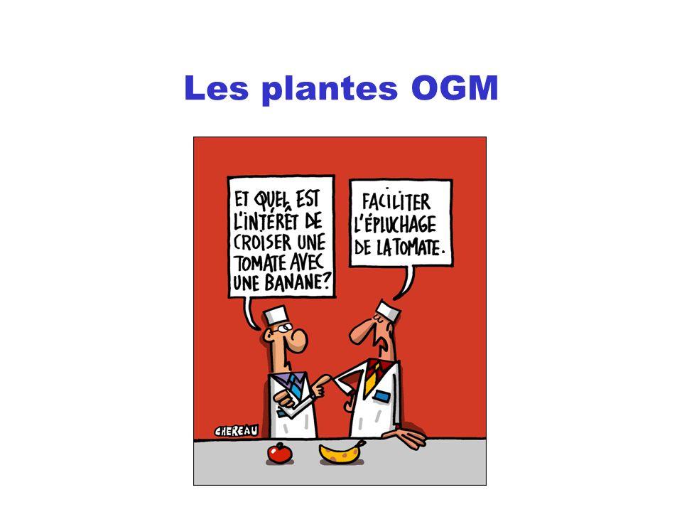 Les plantes OGM