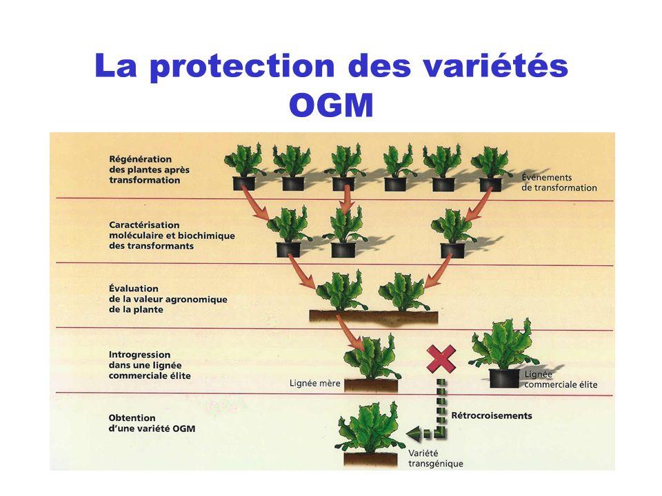 La protection des variétés OGM