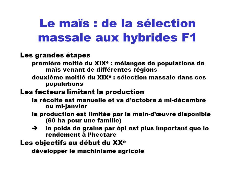 Le maïs : de la sélection massale aux hybrides F1