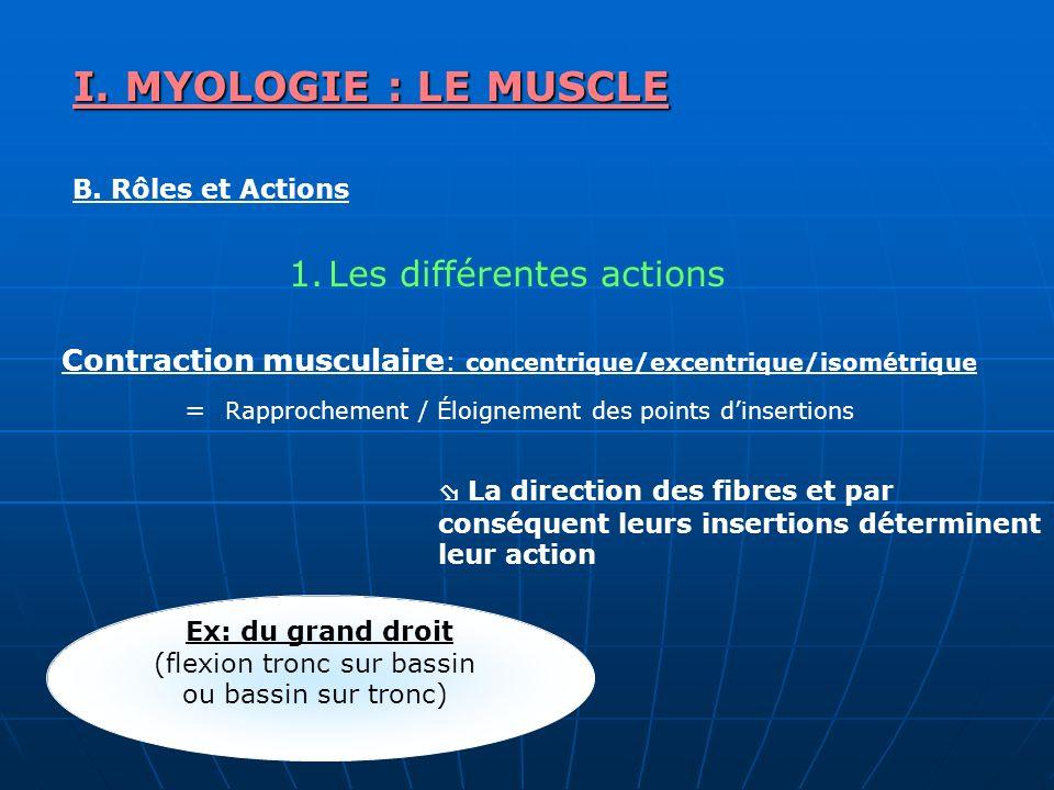 I. MYOLOGIE : LE MUSCLE Les différentes actions