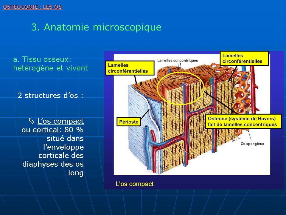 3. Anatomie microscopique