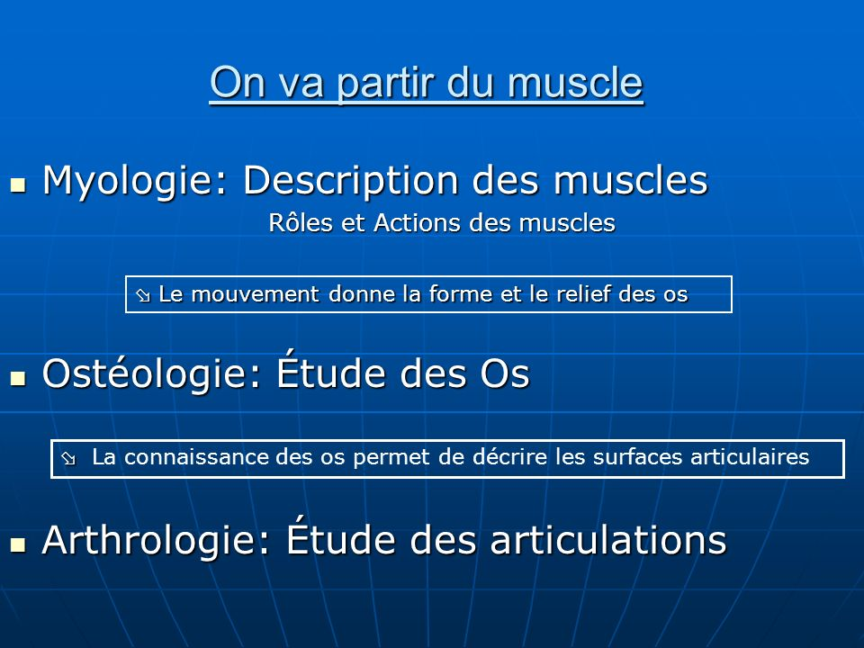 On va partir du muscle Myologie: Description des muscles