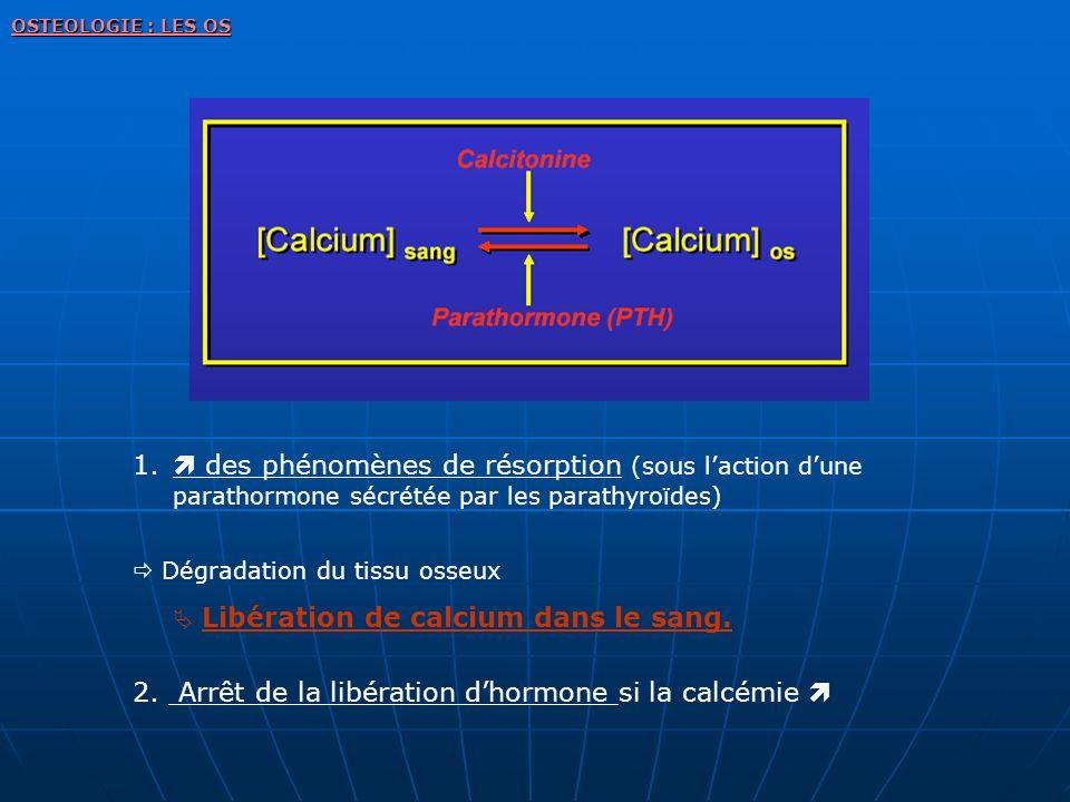 2. Arrêt de la libération d'hormone si la calcémie 