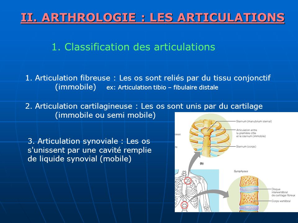 II. ARTHROLOGIE : LES ARTICULATIONS