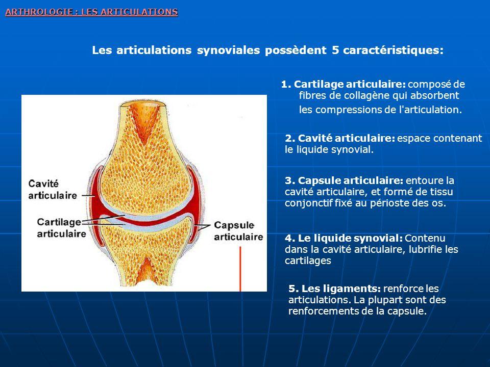 Les articulations synoviales possèdent 5 caractéristiques: