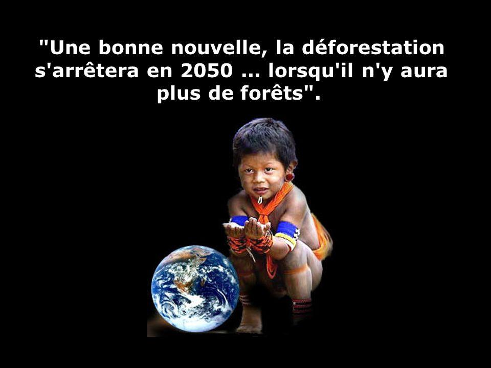 Une bonne nouvelle, la déforestation s arrêtera en 2050